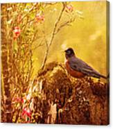 Robin In Spring Canvas Print
