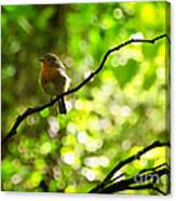 Robin In The Glade Canvas Print