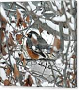 Robin In The Trees Canvas Print