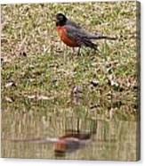 Robin Reflection Canvas Print