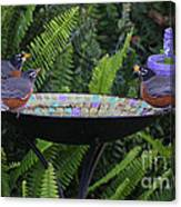 Robins In Bird Bath Canvas Print