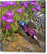 Rock Flower Birguana Fly Canvas Print
