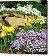 Rock Garden Flowers Canvas Print