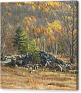 Rock Pile In Maine Blueberry Field Canvas Print