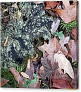 Rock Running Cedar Leaves And Lichen  Natural Abstract Canvas Print