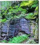 Rock Wall Trail Of The Cedars Glacier National Park Painted Canvas Print