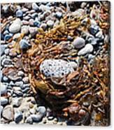 Rock Weed Canvas Print
