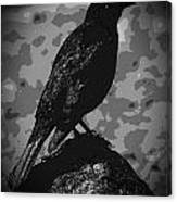 Rockbird Canvas Print