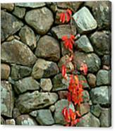 Rocks And Ivy Canvas Print