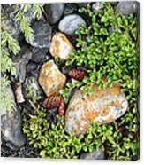 Rocks And Lichen Canvas Print