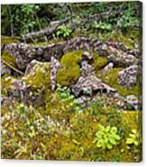 Rocks And Moss II Canvas Print
