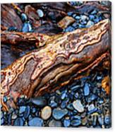 Rocks And Roots Canvas Print