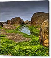 Rocks And Seaweed Canvas Print