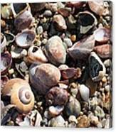 Rocks And Shells Canvas Print