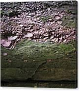 Rocks - Parfreys Glen - Wisconsin Canvas Print