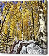 Rocky Aspen Canvas Print
