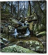 Rocky Branch Canvas Print