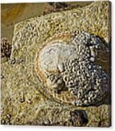 Rocky Cliff Canvas Print