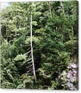 Mountain - Landscape - Trees - Rocky Hillside Canvas Print