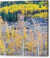 Rocky Mountain Autumn Contrast Canvas Print