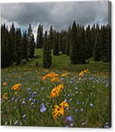 Rocky Mountain Bloom Canvas Print