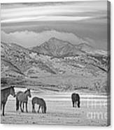 Rocky Mountain Country Morning Bw Canvas Print