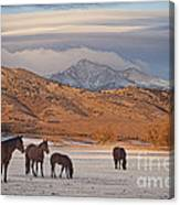 Rocky Mountain Country Morning Canvas Print