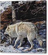 Rocky Mountain Encounter Canvas Print