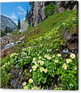 Rocky Mountain Summer Landscape Canvas Print