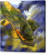 Rocky Mountain Trout  Canvas Print