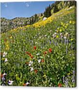 Rocky Mountain Wildflower Landscape Canvas Print