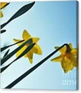 Rodchenko's Daffodils Canvas Print