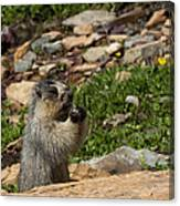 Rodent In The Rockies Canvas Print
