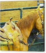 Rodeo Horse Canvas Print