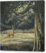 Spirit Of The Moment - Roe Buck Canvas Print
