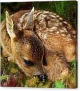 Roe Deer Fawn Canvas Print