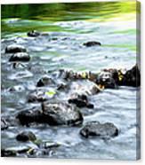 Rolling Brook Canvas Print