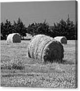 Rolling In The Hay Bw Canvas Print