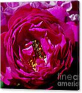 Rolling In The Pollen Canvas Print