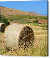 Roll'n The Hay Canvas Print