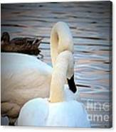 Romance Of The White Swans Canvas Print
