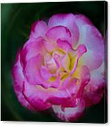 Romancing The Rose Canvas Print