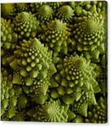 Romanesco Broccoli Close Up Canvas Print
