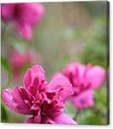 Romantically Pink Canvas Print