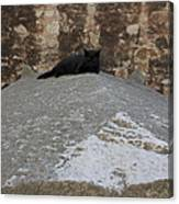 Rome Cat Canvas Print