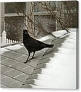 Roof Crow Canvas Print