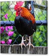 Roost Ruler Canvas Print