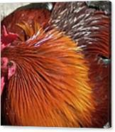 Rooster Colors Canvas Print