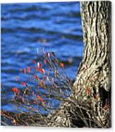 Rooted In Blue  Canvas Print