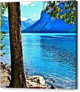 Rooted In Lake Minnewanka Canvas Print